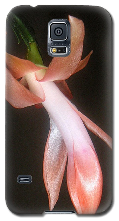 Nature Galaxy S5 Case featuring the photograph Holiday Cactus - In Night Light by Lucyna A M Green