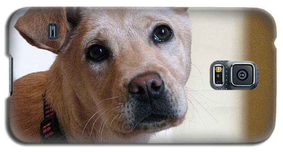 Dog Galaxy S5 Case featuring the photograph Honey by Amanda Barcon