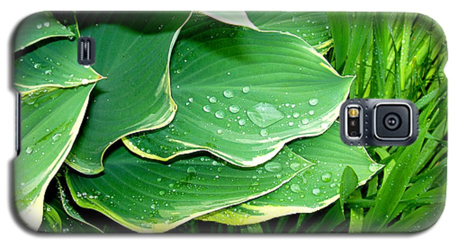 Hostas Galaxy S5 Case featuring the photograph Hosta Leaves And Waterdrops by Nancy Mueller