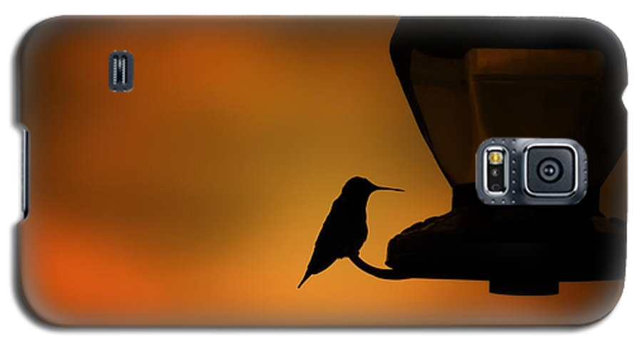 Hummingbird Galaxy S5 Case featuring the photograph Hummingbird After The Storm by Al Mueller