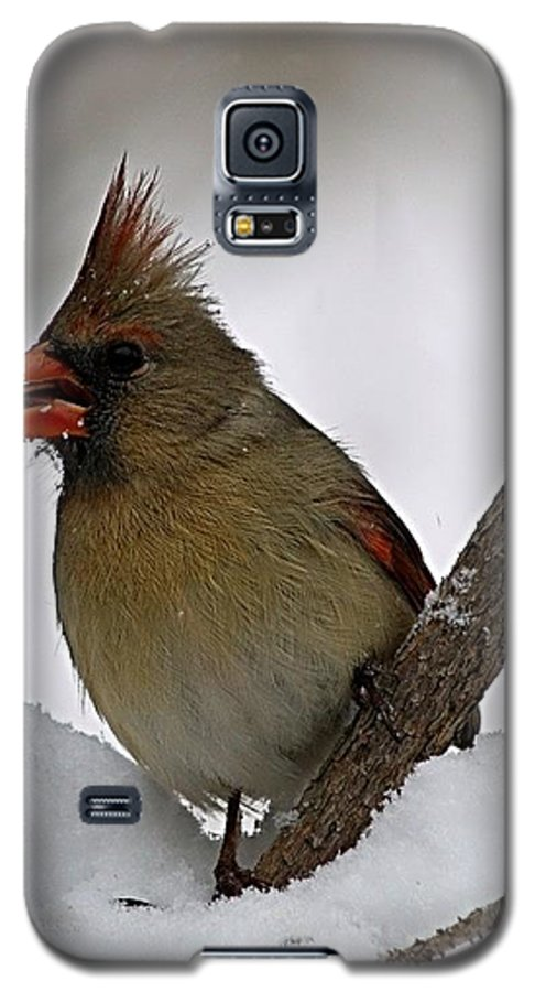 Bird Galaxy S5 Case featuring the photograph I Love Seeds by Gaby Swanson