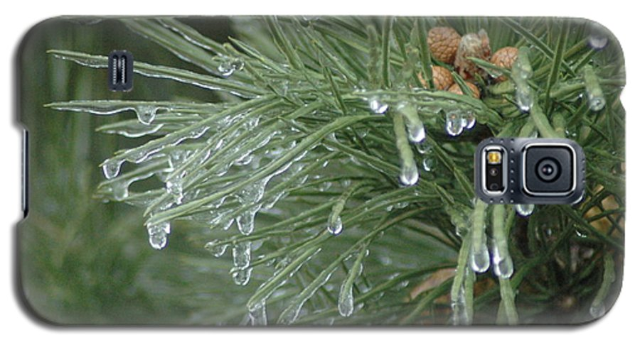 Nature Galaxy S5 Case featuring the photograph Iced Pine by Kathy Schumann