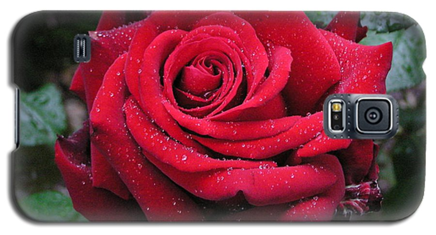 Rose Galaxy S5 Case featuring the photograph Icy Rose by Louise Magno
