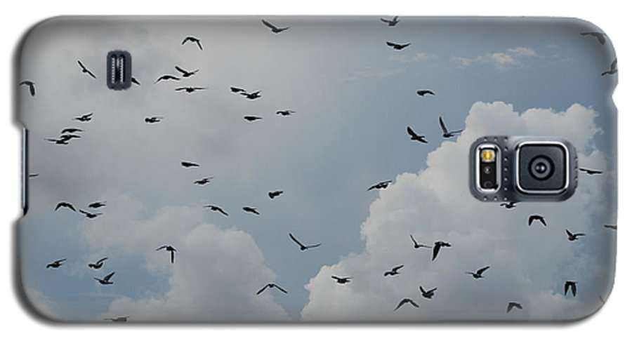 Birds Galaxy S5 Case featuring the photograph In Flight by Rob Hans