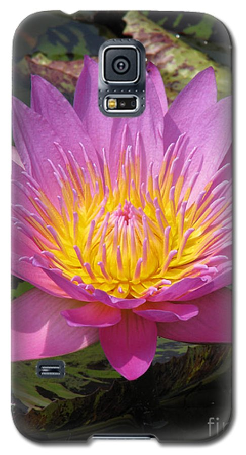 Lotus Galaxy S5 Case featuring the photograph In Position by Amanda Barcon