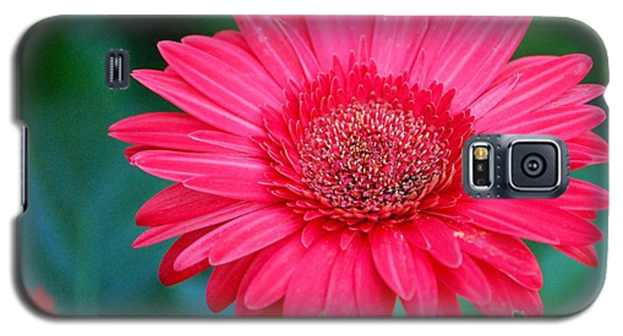 Gerber Daisy Galaxy S5 Case featuring the photograph In The Pink by Debbi Granruth