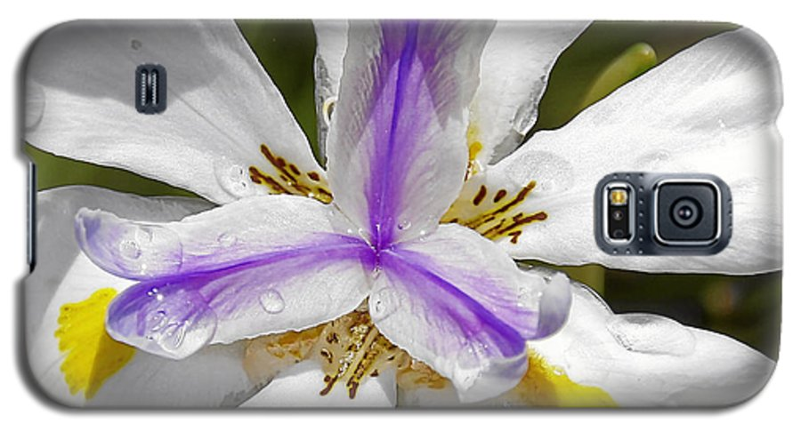 Flower Galaxy S5 Case featuring the photograph Iris An Explosion Of Friendly Colors by Christine Till