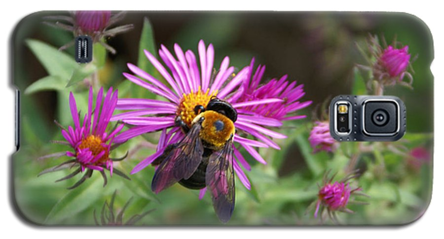 Bumble Bee Galaxy S5 Case featuring the photograph Just Beeing Debbie-may by Debbie May
