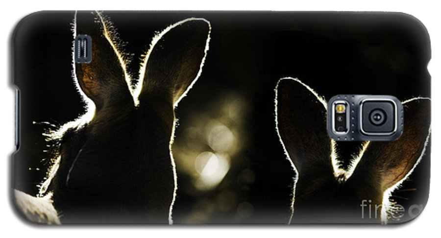 Kangaroo Galaxy S5 Case featuring the photograph Kangaroos Backlit by Sheila Smart Fine Art Photography