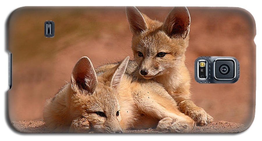 Fox Galaxy S5 Case featuring the photograph Kit Fox Pups On A Lazy Day by Max Allen