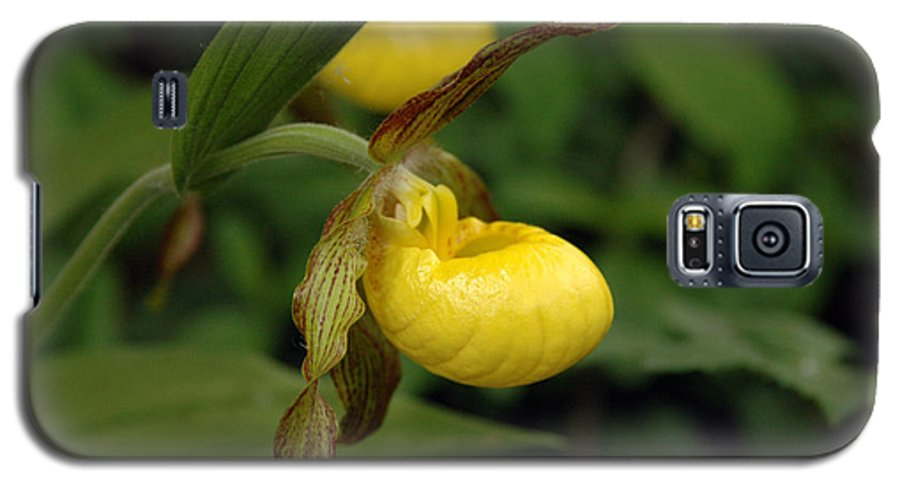 Ladyslipper Galaxy S5 Case featuring the photograph Lady Slipper by Kathy Schumann