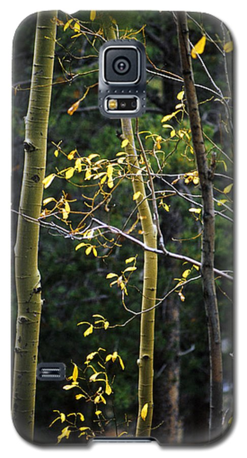 Aspen Galaxy S5 Case featuring the photograph Late Aspen by Jerry McElroy