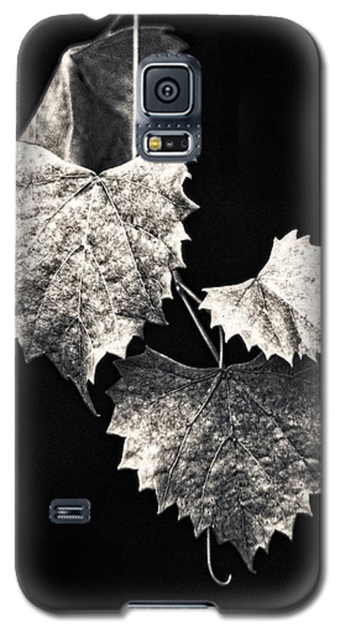 B&w Galaxy S5 Case featuring the photograph Leaves by Christopher Holmes