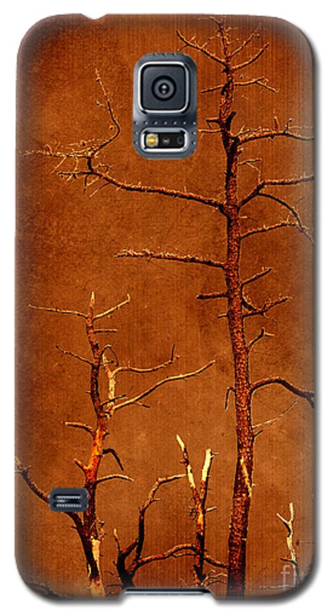 Dipasquale Galaxy S5 Case featuring the photograph Left Bare And Broken by Dana DiPasquale