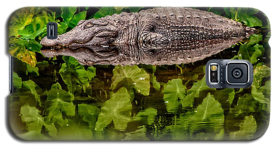 Alligator Galaxy S5 Case featuring the photograph Let Sleeping Gators Lie by Christopher Holmes