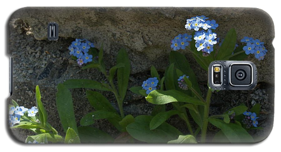 Forget-me-nots Galaxy S5 Case featuring the photograph Life Will Prevail by Anna Lisa Yoder