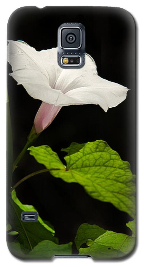 Flower Galaxy S5 Case featuring the photograph Light Out Of The Dark by Christopher Holmes