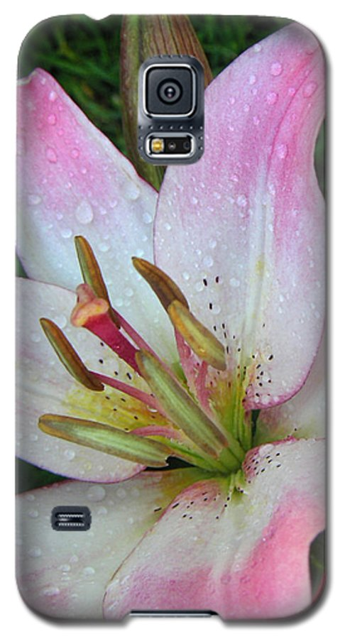 Nature Galaxy S5 Case featuring the photograph Lily Singled Out by Lucyna A M Green