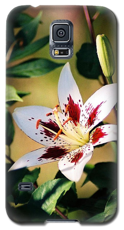 Flower Galaxy S5 Case featuring the photograph Lily by Steve Karol