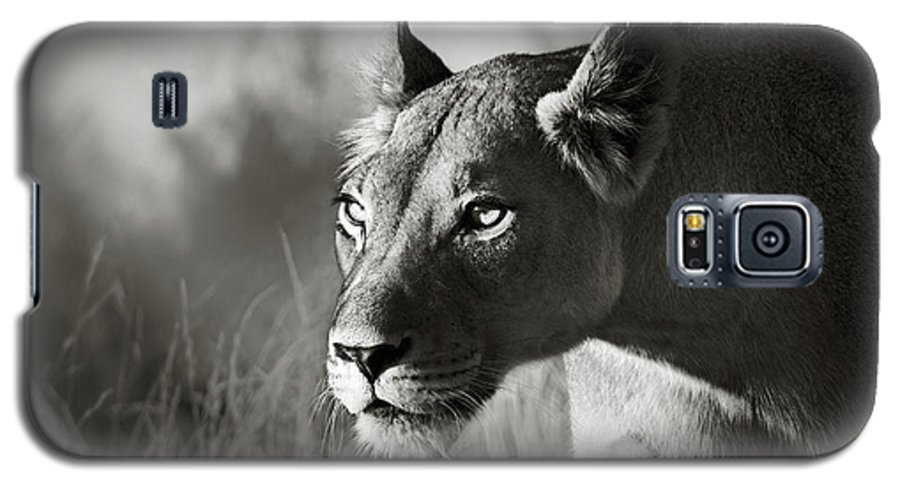 Lioness Galaxy S5 Case featuring the photograph Lioness Stalking by Johan Swanepoel