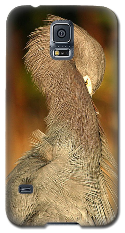 Heron Galaxy S5 Case featuring the photograph Little Blue Heron Feeling Bashful by Max Allen