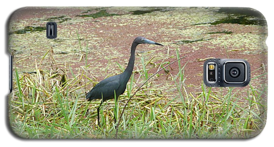 Nature Galaxy S5 Case featuring the photograph Little Blue Heron by Kathy Schumann