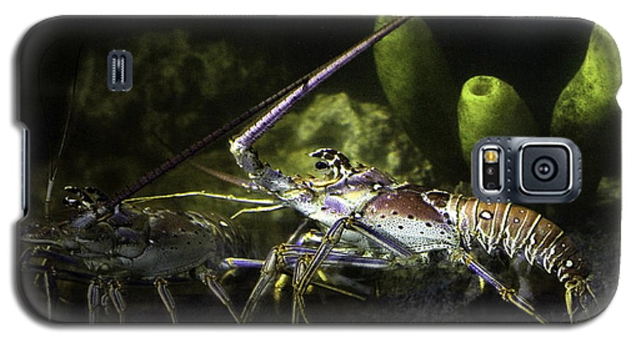 Lobster Galaxy S5 Case featuring the photograph Lobster In Love by Marilyn Hunt