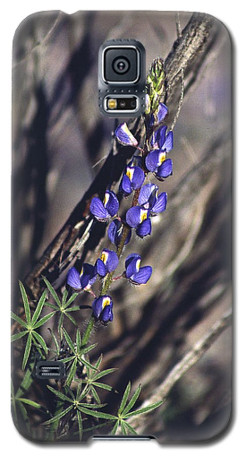 Flower Galaxy S5 Case featuring the photograph Lonely Lupine by Randy Oberg