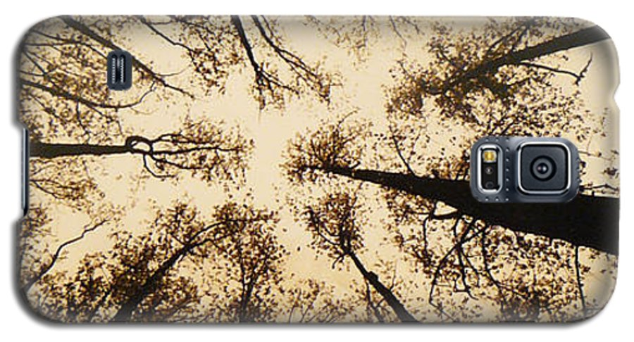 Trees Galaxy S5 Case featuring the photograph Looking Up by Jack Paolini