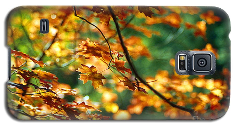 Fall Color Galaxy S5 Case featuring the photograph Lost In Leaves by Kathy McClure