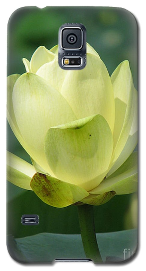 Lotus Galaxy S5 Case featuring the photograph Lotus by Amanda Barcon