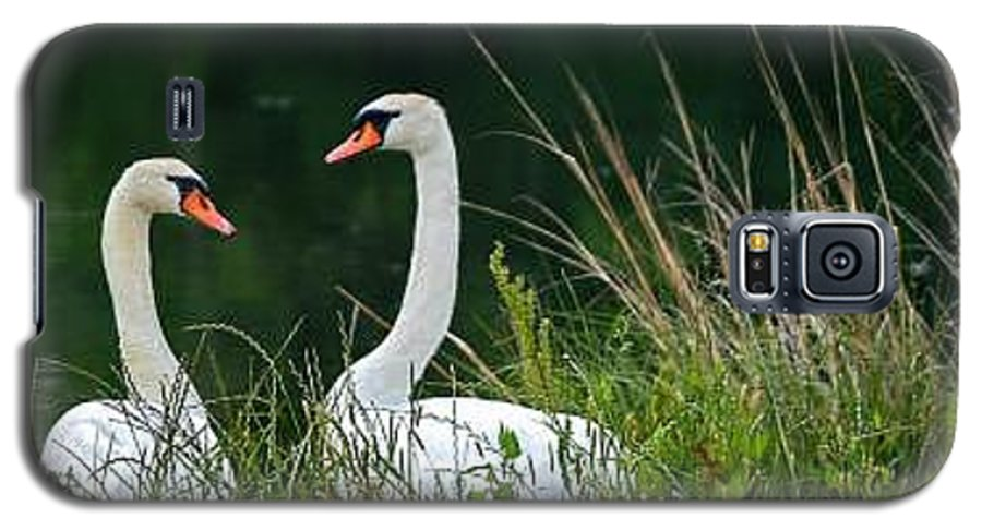 Clay Galaxy S5 Case featuring the photograph Loving Swans by Clayton Bruster