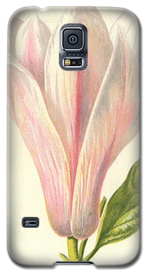 Magnolia Galaxy S5 Case featuring the painting Magnolia by Frederick Edward Hulme