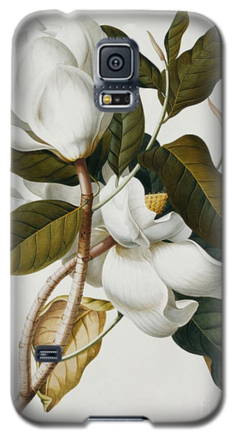 Magnolia Galaxy S5 Case featuring the painting Magnolia by Georg Dionysius Ehret