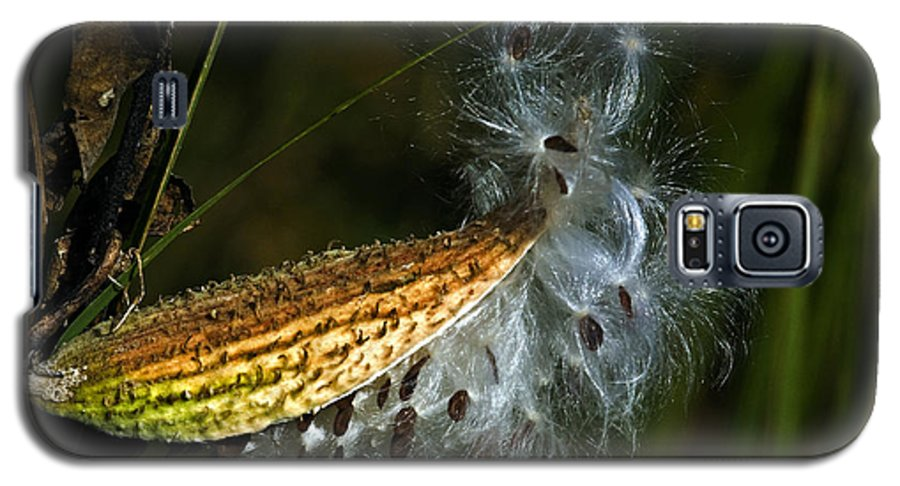 Autumn Galaxy S5 Case featuring the photograph Milkweed Pod by Al Mueller