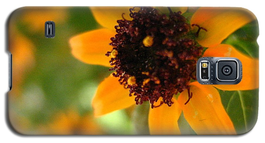 Flower Galaxy S5 Case featuring the photograph Mini Sunflower by Melissa Parks