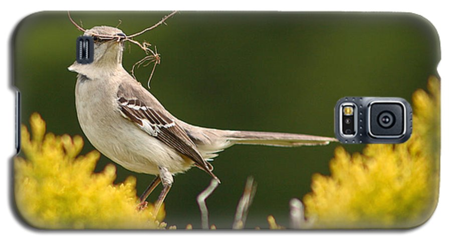 Mockingbird Galaxy S5 Case featuring the photograph Mockingbird Perched With Nesting Material by Max Allen