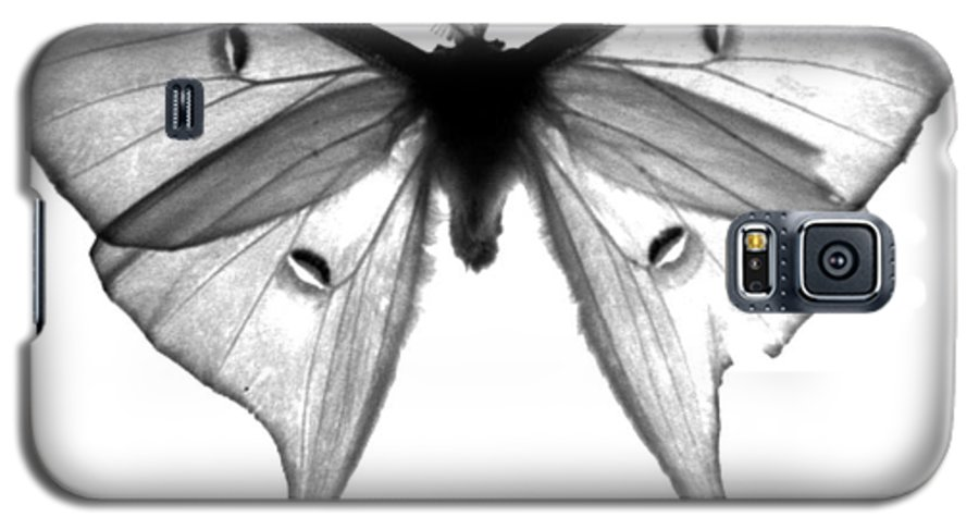 Moth Galaxy S5 Case featuring the photograph Moth by Amanda Barcon