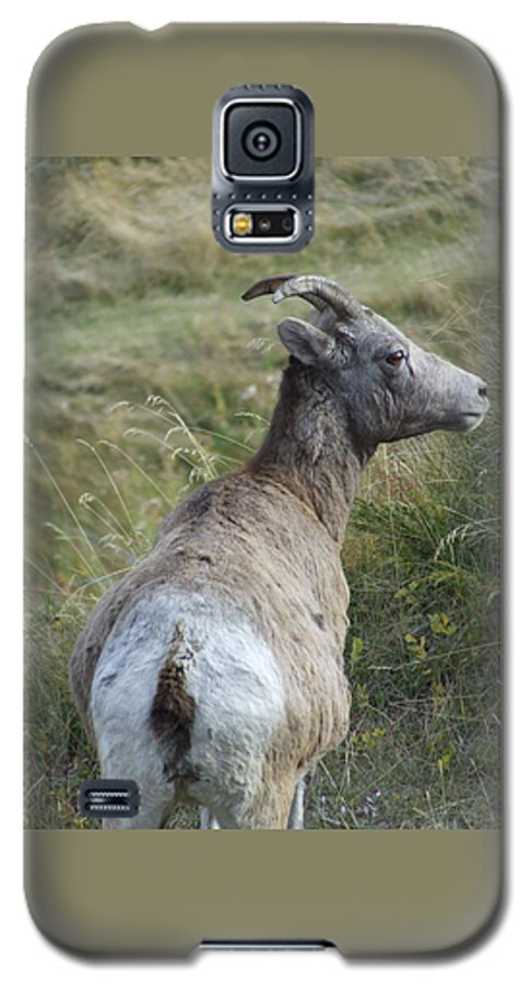 Bighorn Sheep Galaxy S5 Case featuring the photograph Mother Bighorn by Tiffany Vest