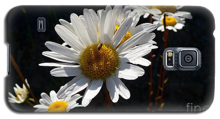 Flowers Galaxy S5 Case featuring the photograph Mountain Daisy by Larry Keahey