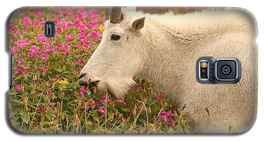 Mountain Goat Galaxy S5 Case featuring the photograph Mountain Goat In Colorful Field Of Flowers by Max Allen