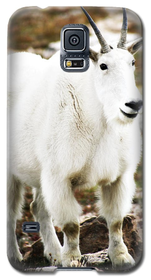 Animal Galaxy S5 Case featuring the photograph Mountain Goat by Marilyn Hunt