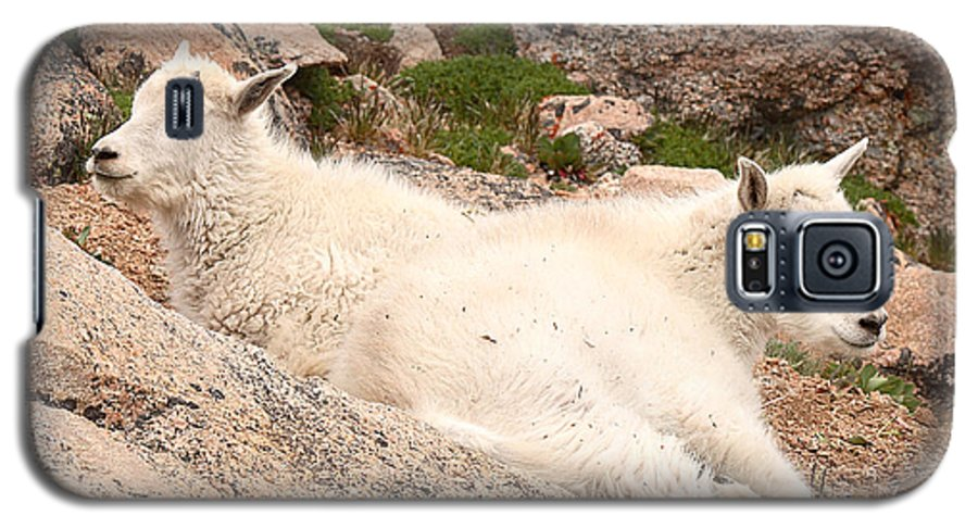 Mountain Goat Galaxy S5 Case featuring the photograph Mountain Goat Twins by Max Allen