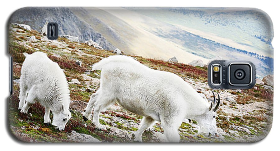 Mountain Galaxy S5 Case featuring the photograph Mountain Goats 1 by Marilyn Hunt