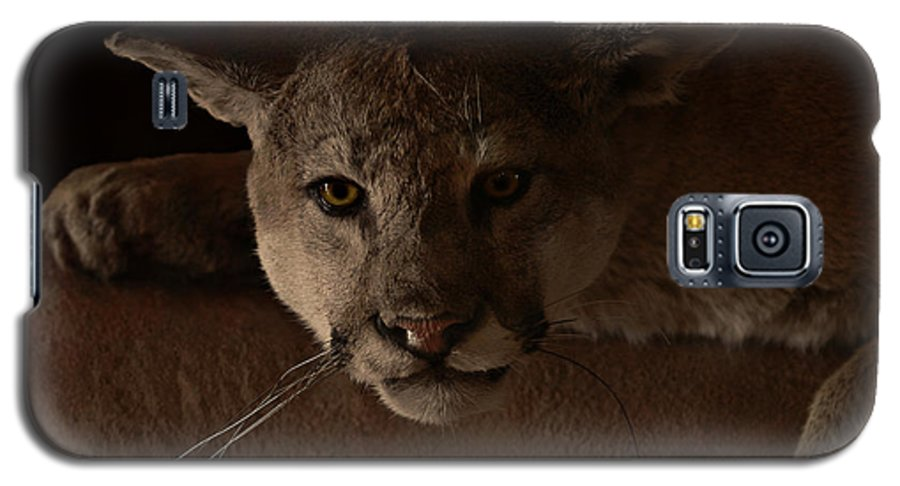 Cougar Galaxy S5 Case featuring the photograph Mountain Lion A Large Graceful Cat by Christine Till