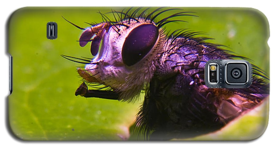 Fly Galaxy S5 Case featuring the photograph Mr. Fly by Douglas Barnett