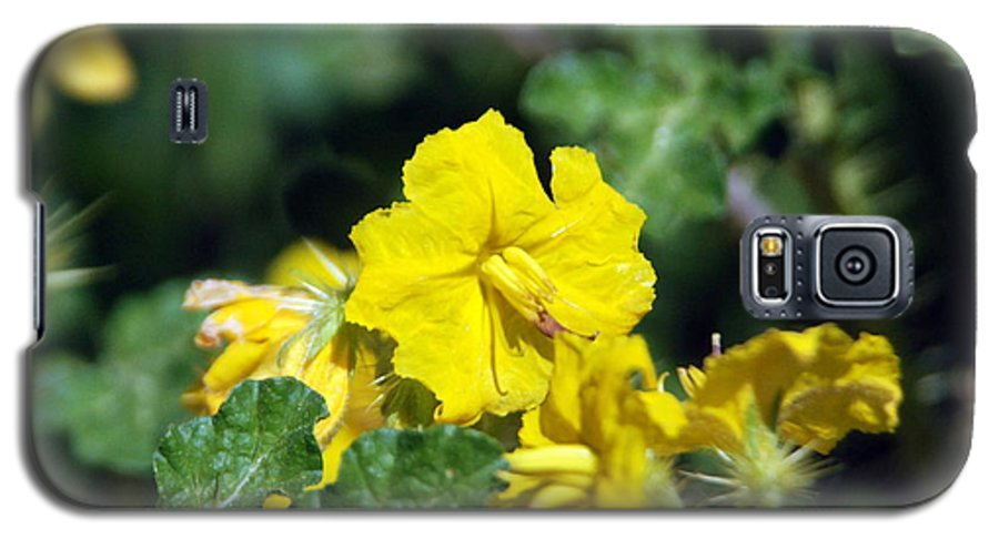 Flower Galaxy S5 Case featuring the photograph Nasty Weed by Margaret Fortunato
