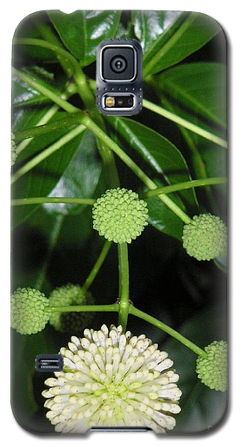 Nature Galaxy S5 Case featuring the photograph Nature In The Wild - Natural Pom Poms by Lucyna A M Green