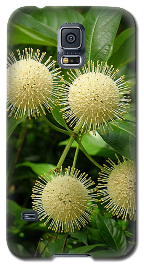 Nature Galaxy S5 Case featuring the photograph Nature In The Wild - Pin Cushions Of Nature by Lucyna A M Green
