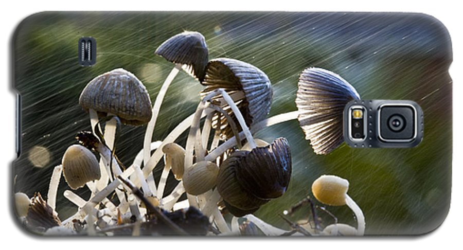 Mushrooms Rain Showers Umbrellas Nature Fungi Galaxy S5 Case featuring the photograph Nature by Sheila Smart Fine Art Photography